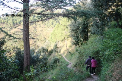 A forest hike at Park Woods Shoghi.