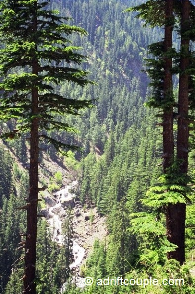 A beautiful stream coming down the mountain slope prolific with cedars en route from Sangla to Kanda, Kinnaur