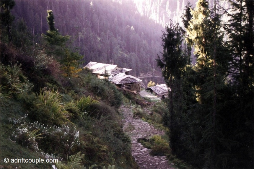 Unending slopes of emerald forests in Shoja, Himachal Pradesh