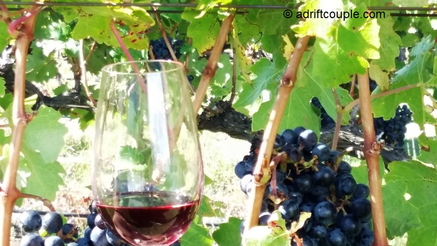 Grape and Wine at Holden Manz Vinery, Franschhoek