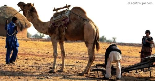 Hitching Camel Cart at DNP