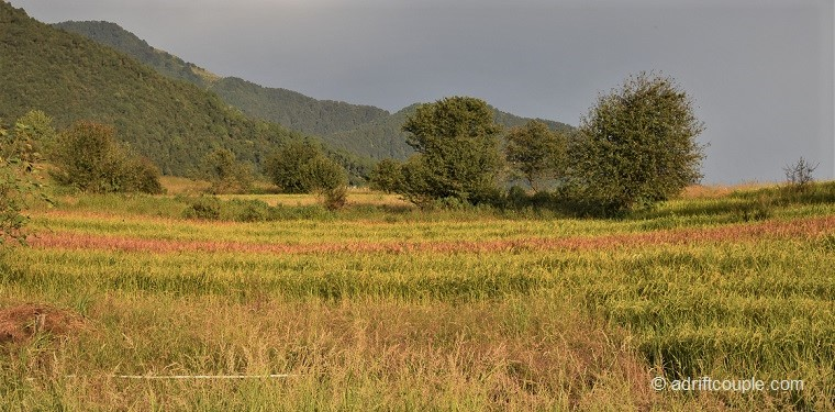 Enchanting fields covered in patches of green, yellow, red and brown in Bir, Kangra, Himachal Pradesh.