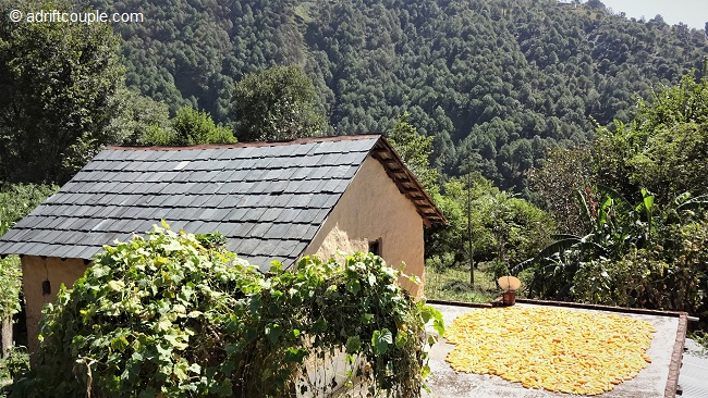 Corn cobs and hay drying on roof tops of Gunehar village homes with the mountains forming the backdrop.