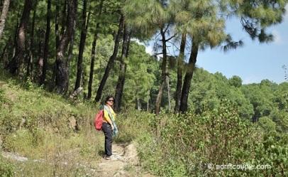 Keori Pine Forest