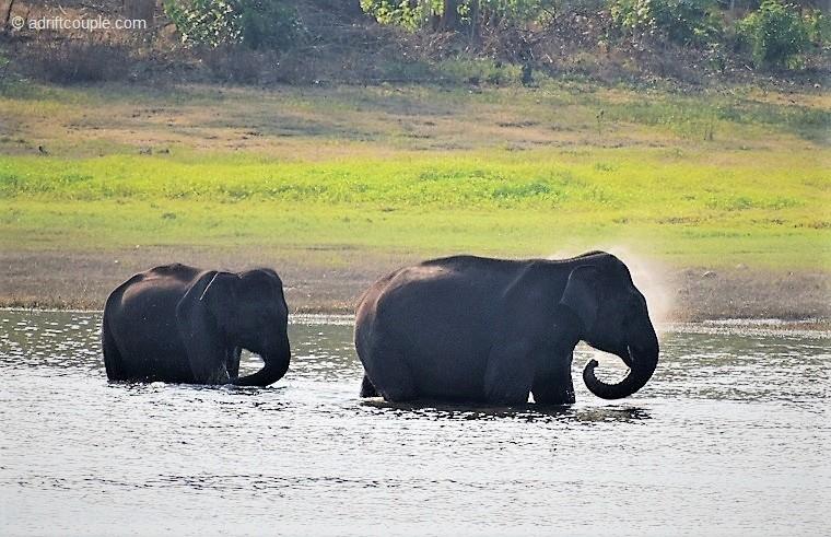 Elephants in River in Nagarhole