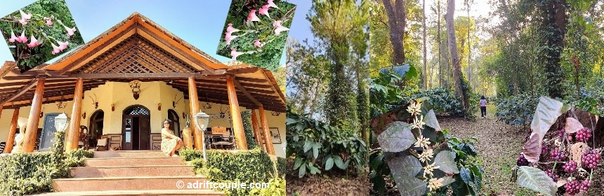 Indelible Affair at a Coffee Plantation in Coorg! | Adrift ...